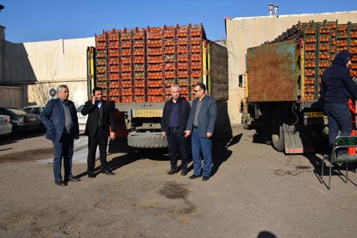 عرضه مستقیم پرتقال درجه یک تامسون شمال در فروشگاه های منتخب شبکه تعاونیهای روستایی آذربایجان شرقی