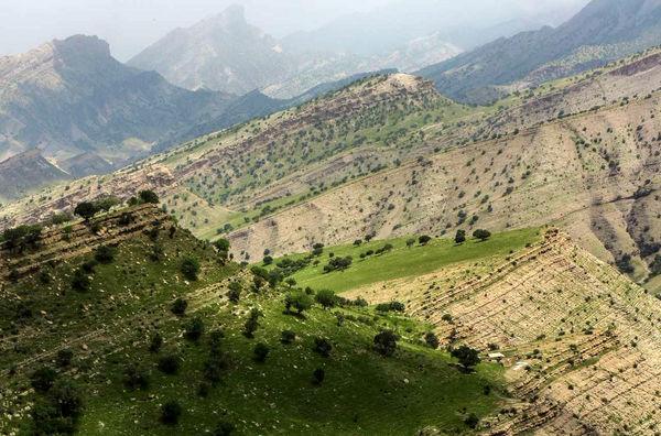 احیای جنگلهای زاگرس با همکاری سازمان جایکا