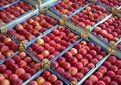 برگزاری جلسه ساماندهی و تسهیل صادرات سیب درختی آذربایجان غربی در وزارت جهاد کشاورزی