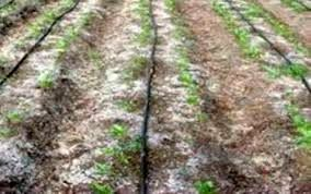شوری خاک، کشاورزی خراسان شمالی را تهدید میکند