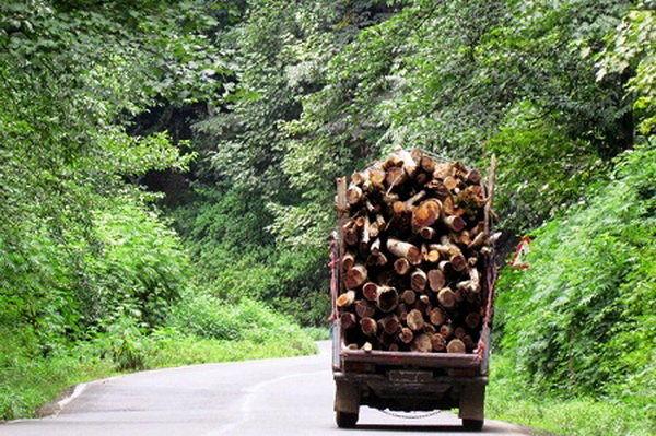 توقیف خودرو حامل چوب قاچاق در جاده ارمند