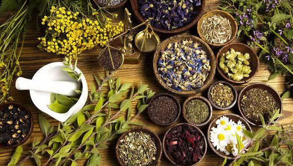 پیش بینی تولید 540 تن فرآورده گیاهان دارویی در شهرستان سامان