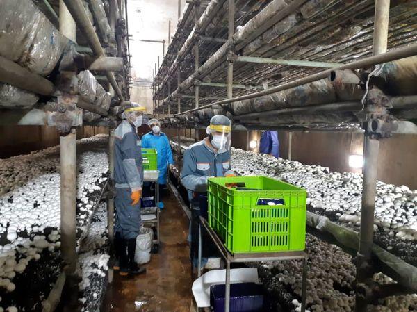 ارزآوری 8.6 میلیون دلاری صادرات قارچ ایران