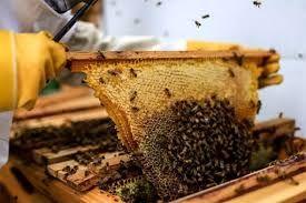 فعالیت ۳۱۷۲ زنبورستان در استان زنجان