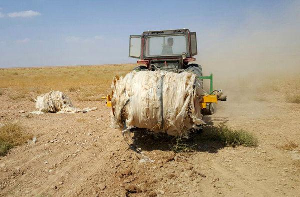 بقایای پلاستیک را از مزارع جالیزی جمع آوری کنید