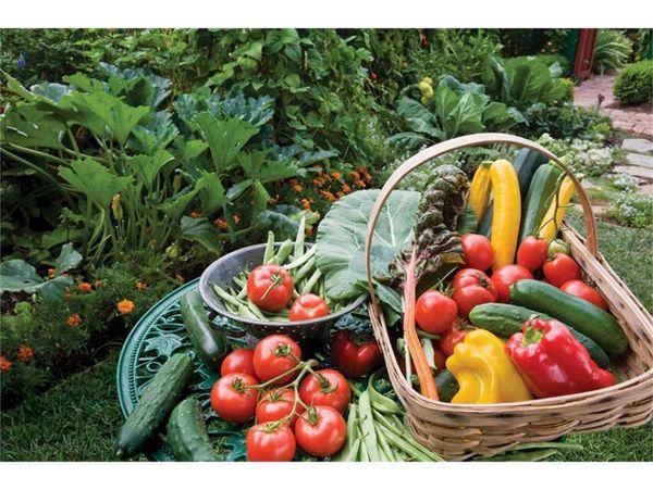 تولید 21 هزار تن سبزی و صیفی در قائمشهر