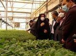 قزوین جزو استانهای برتر کشور در تولید نشا است