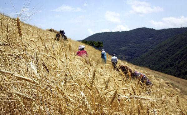 نابودی کشاورزی سنتی با تغییرات آبوهوایی
