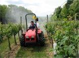 35 درصد از باغات پسته و زیتون در کشور مکانیزه برداشت میشود