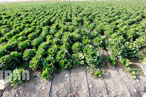 2 میلیون و 880  هزار تن محصولات زراعی در استان قزوین تولید شد