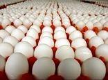تولید تخم مرغ در استان سمنان 3 برابر شد