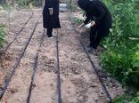 5 سایت فعال تولید سبزی سالم در شهرستان آبیک فعال است