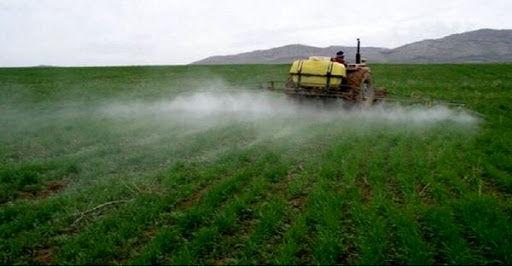 مدیریت و کنترل علفهای هرز در مزارع گندم و جو خراسان شمالی