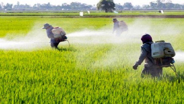 هشدار درمورد مصرف بیش از حد سموم کشاورزی در اصفهان