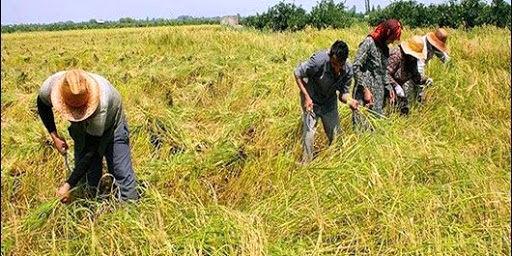 توسعه کشاورزی مهمترین راهکار رفع بیکاری است