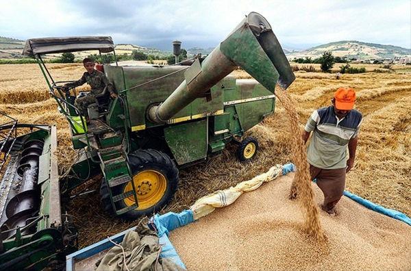 6.7 میلیون تن گندم از کشاورزان خریداری شد