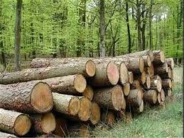 کشف ۴۶۶ اصله درخت قطع شده در چهارمحال و بختیاری