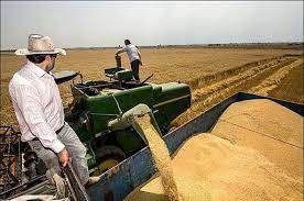 ۱۴۷ هزار تن گندم مازاد بر نیاز کشاورزان آذربایجان غربی خریداری شد