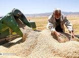 خرید تضمینی 277 هزار تن گندم در کردستان