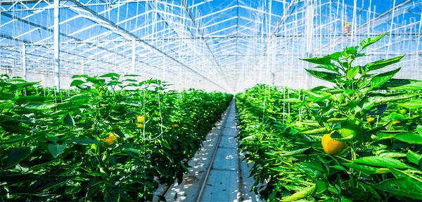 سرمایهگذاری ۲ هزار میلیارد ریالی در شهرک گلخانهای نودهک