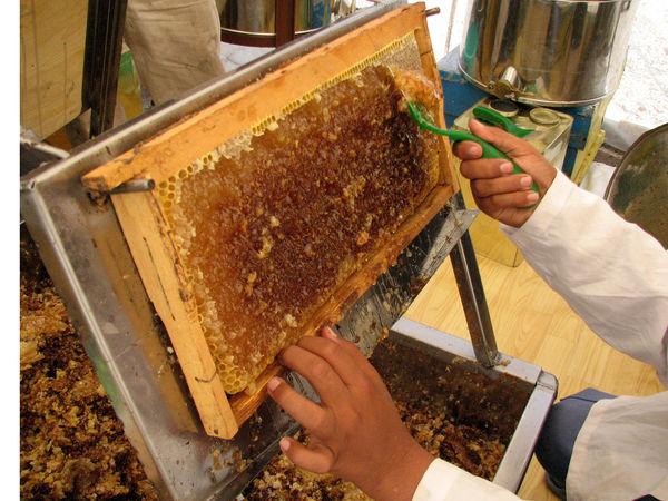 107 تن عسل در زنبورستان های شهرستان آوج تولید شد