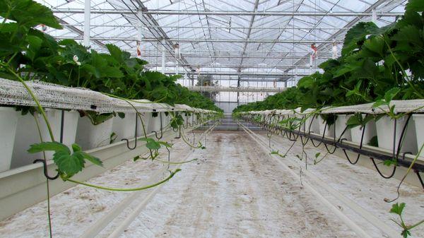 افزایش 30 تا 100 درصدی تولید سبزی و صیفی با استفاده از سیستمهای هیدروپونیک