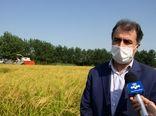 اولین برداشت مکانیزه برنج در گیلان آغاز شد