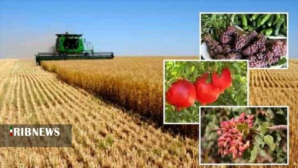 افزایش تولیدات کشاورزی در استان کردستان