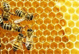 افزایش ۲۰ درصدی تولید عسل در اسدآباد