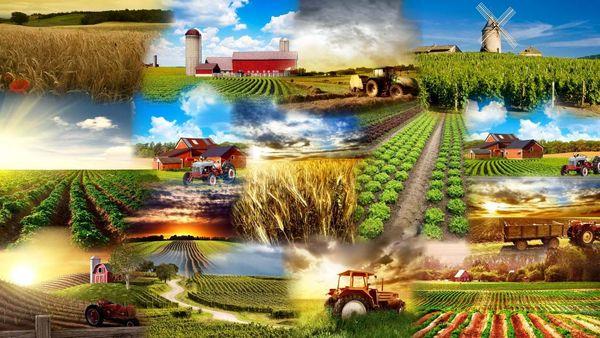 تشکیل اتاق اصناف کشاورزی در افزایش تولید محصولات تاثیر بسزایی دارد