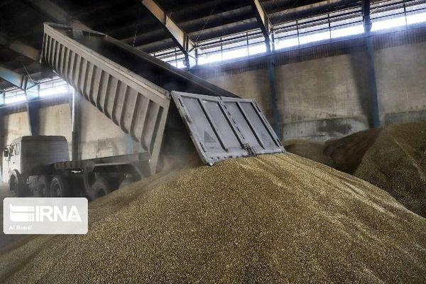 بیش از ۱۹ هزار تُن محصول مازاد بر نیاز در کردستان خریداری شد