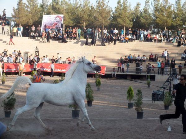 پرورش بیش از 6506 رأس اسب از نژادهای مختلف در استان کرمان