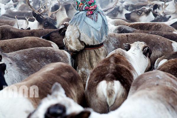 زندگی در سیبری