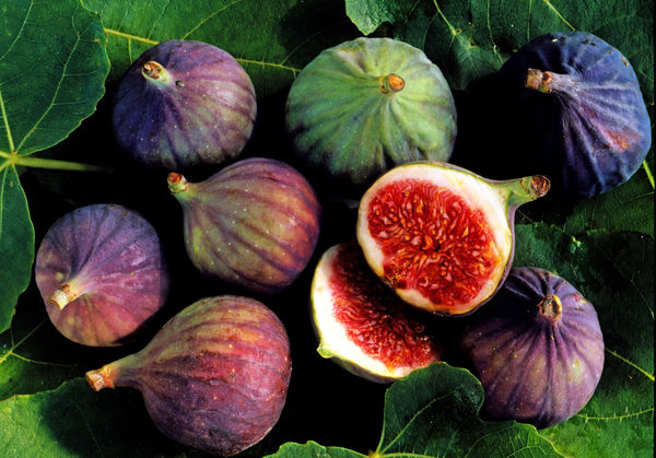 ارزآوری 500 میلیون دلاری صادرات میوههای گرمسیری و نیمهگرمسیری