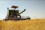 برداشت گندم و جو در چرداول به پایان رسید