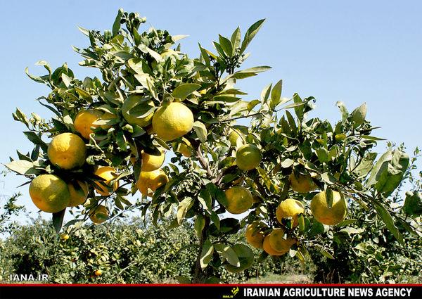 باغ نارنگی