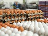 صادرات ۴۷۰تن تخم مرغ خوراکی از کاشان به کشورهای عراق و ترکیه