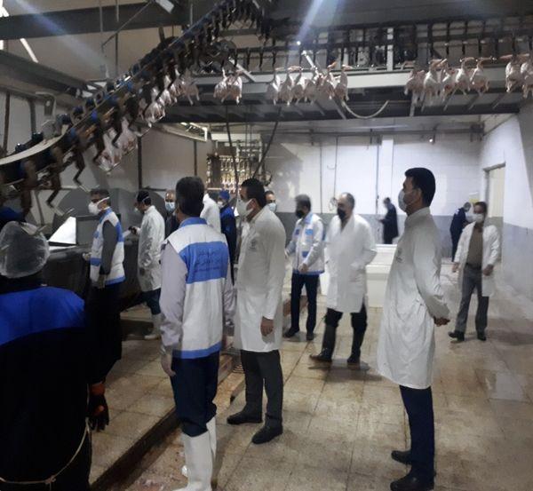 فعالیت بیوقفه کشتارگاههای طیور برای تامین مرغ در خوزستان