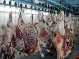 تولید 330 میلیاردی گوشت قرمز در نور