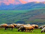 پروانههای چرای دام در مراتع استان سمنان دارای طرح اجرایی میشود