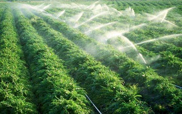 ۱۳ هزار هکتار اراضی ایلام تحت پوشش سامانه گرمسیری است