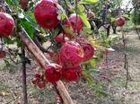 بارش تگرگ و جاری شدن سیل 2000 میلیارد ریال به اراضی کشاورزی ارومیه خسارت وارد کرد