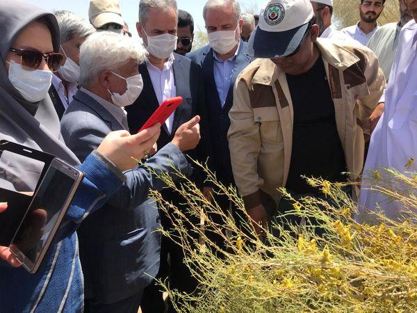 بازید وزیر جهاد کشاورزی از مناطق آلوده به ملخ