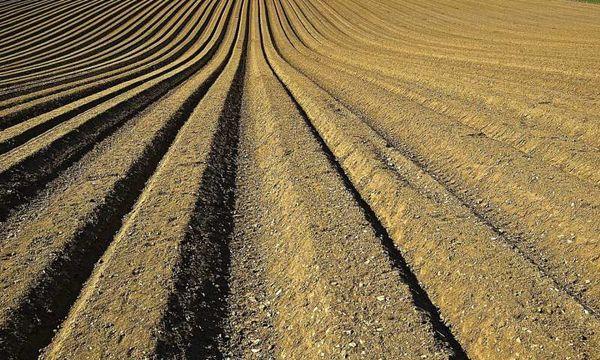 تولید محصولات کشاورزی با استفاده از نیتروژن کمتر