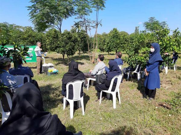 برگزاری روز مزرعه مرکبات در شهرستان رودسر