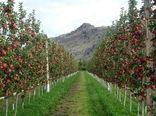 استان کرمانشاه یک هزار و صد هکتار باغ مدرن دارد