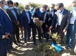 بازدید استاندار کرمان از مزارع خسارت دیده شهرستان عنبرآباد
