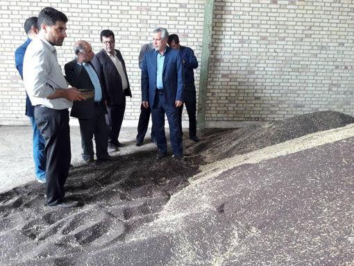 خرید تضمینی کلزا در استان آذربایجان شرقی آغاز شد