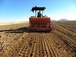 کشت گندم در سال جاری در این شهرستان از مرز 7000 هکتار فراتر می رود