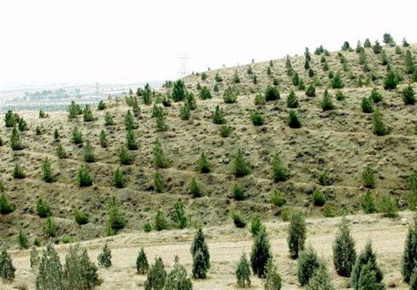 ایجاد بیش از 2 میلیون هکتار جنگل های دست کاشت بیابانی
